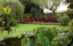 Andromeda Botanic Gardens in Barbados