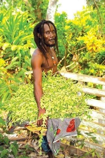 Meet a Bajan - Ras Ils