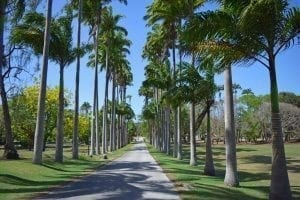 Cabbage Palm Avenue