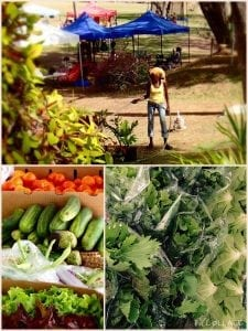 Barbados Experiences - Fresh Vegetables