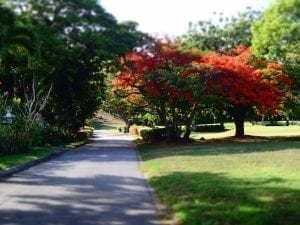 Barbados Experiences - Beautiful Trees