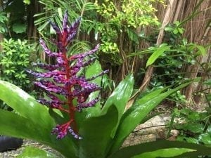 All types of flowers to admire at the Flower Forest Botanical Gardens in Barbados.