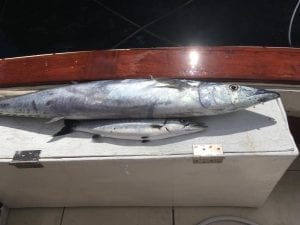 Barbados Catch on Legacy Fishing Charters Barbados.