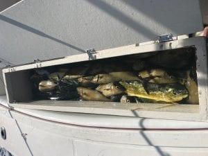 Fish Box on Betsy B with Amberjacks and Mahi Mahi.