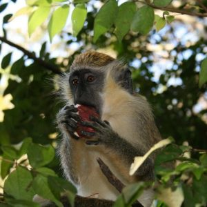 Photos of Barbados Wildlife Reserve