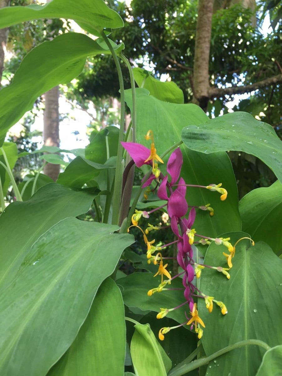 Flower Forest Botanical Gardens -  Green Barbados.